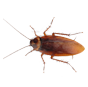 Cockroach Extermination Los Angeles